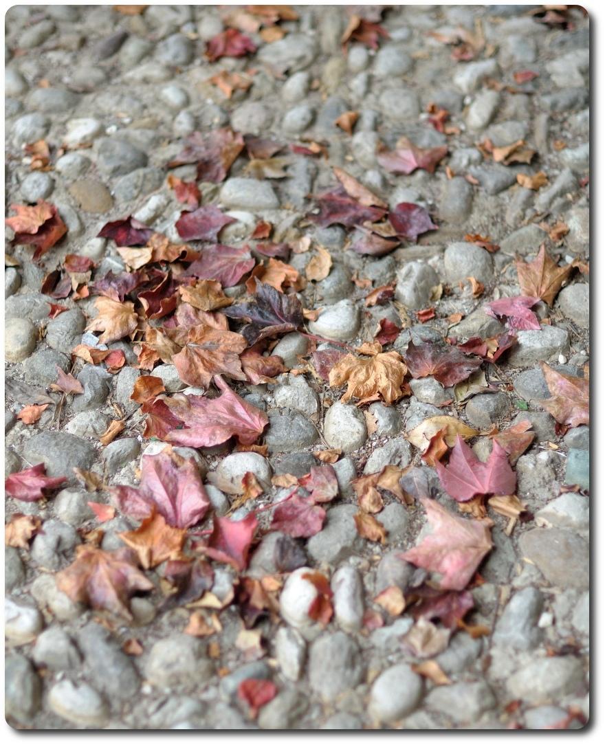 pordenone vistorta foglie rdb