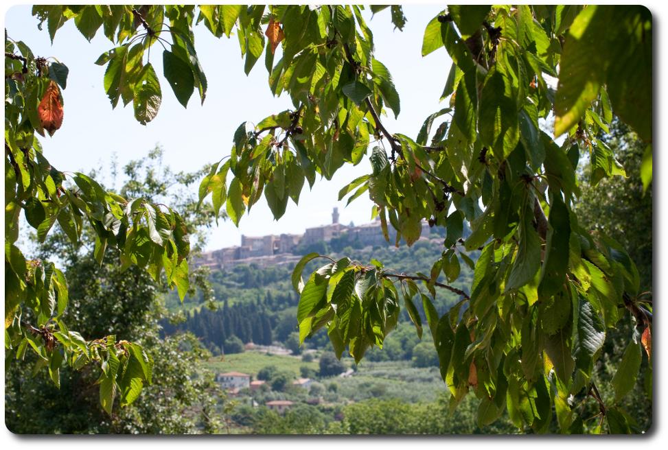 montepulciano_vista
